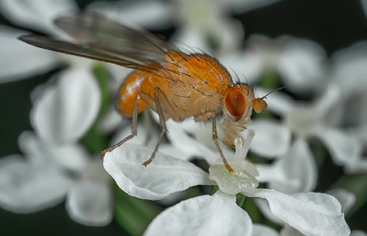 Wenn Fliegen Hunger haben